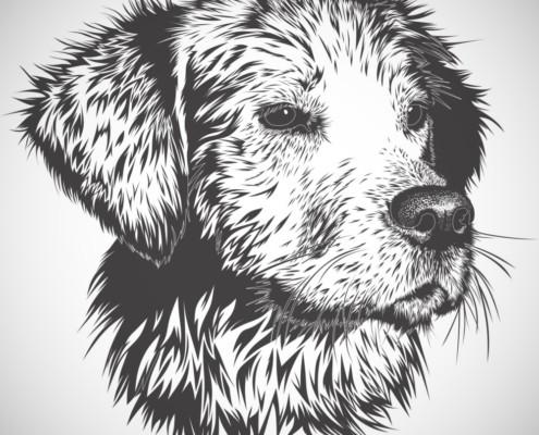 Картины домашних животных 6