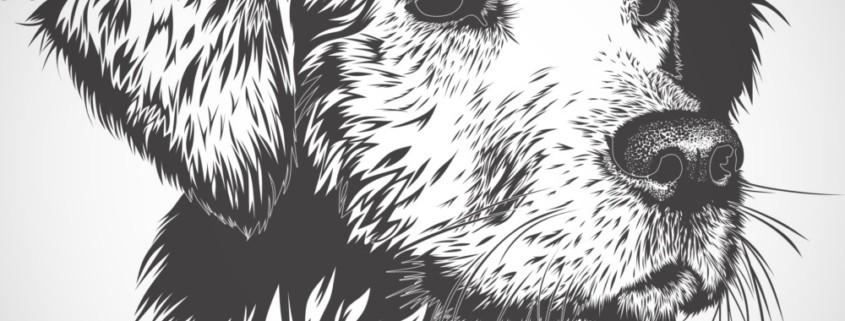 Картины домашних животных 1